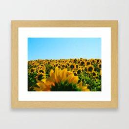 Do as the sunflowers do Framed Art Print