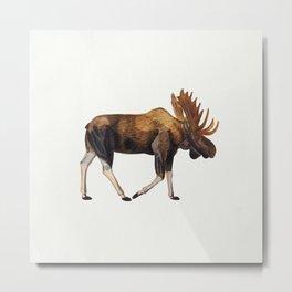 Watercolour Moose Drawing Metal Print
