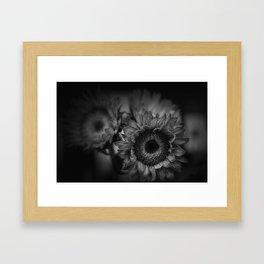Sunflower in black and white Framed Art Print