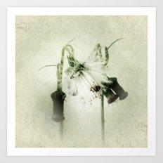 Droopy Dandelions Art Print