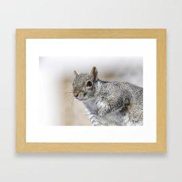 Wet paw Squirrel Framed Art Print