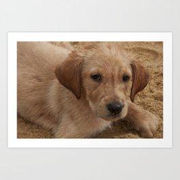 Encarando - Sand Dogs Series (Cachorros de Areia) - por Gustavo Souto Art Print