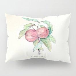 Prunus Persica (Peach) Pillow Sham