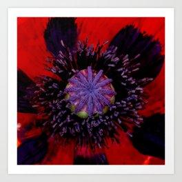 Poppy Heart 3 Art Print