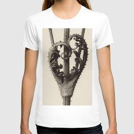 Karl Blossfeldt - Dipsacus laciniatus T-shirt