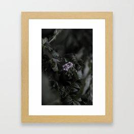 Potato flower Framed Art Print