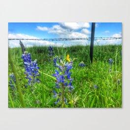 Bluebonnet 1 Canvas Print