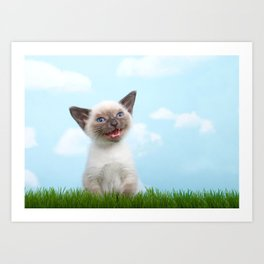 Siamese kitten singing Art Print