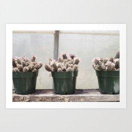Three Little Cacti Art Print