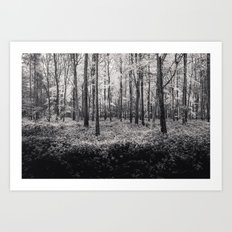 Forest in Rain - Black and White Collection Art Print