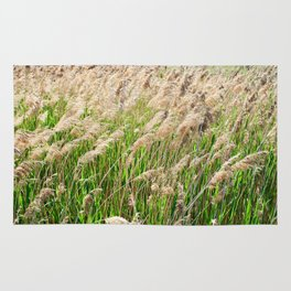 Blooming foxtail in summer sunny day Rug