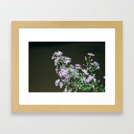 watkins glen aster Framed Art Print