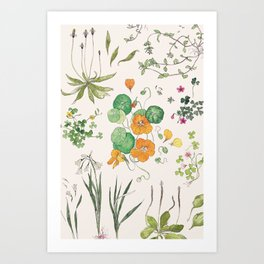 Eat Your Weeds botanical tableau Art Print