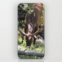 Elk Buck With Velvet Horns in Trees Yellowstone National Park iPhone Skin