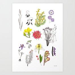 Herbarium #1 Art Print
