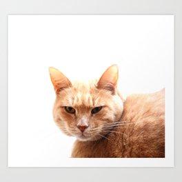 Red cat watching Art Print