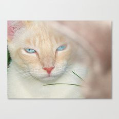 Prince Willy Canvas Print