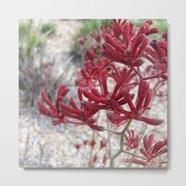 Red Kangaroo Paw Metal Print