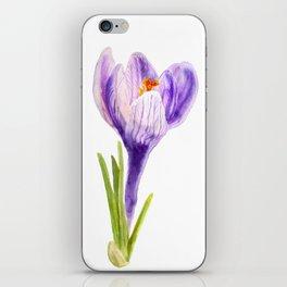Delicate spring flower of crocus iPhone Skin