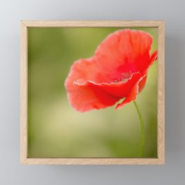 Miss you so much Red Poppy #decor #society6 Framed Mini Art Print