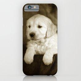 Labrador puppies iPhone Case