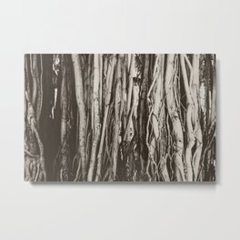 Oahu Banyan Trees Metal Print
