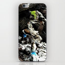 Blue Footed Booby iPhone Skin
