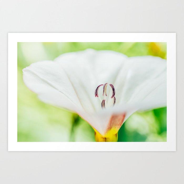 White Flower, Garden Flowers, Flora, Flower Petals, Beautiful Flower, Macro And