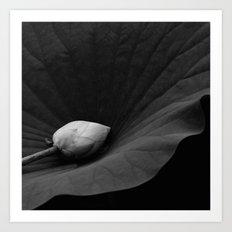 Bud on Lotus Leaf Art Print