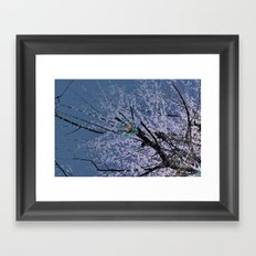 Plum tree EX Framed Art Print