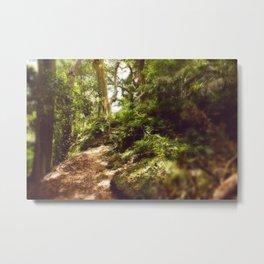 Lord Howe Island, Follow the Trees Metal Print