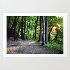 Forest Sunset Art Print