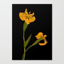 Wild Summer Iris II Canvas Print