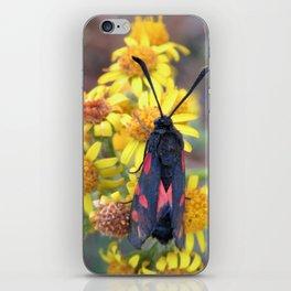 Burnet Moth iPhone Skin
