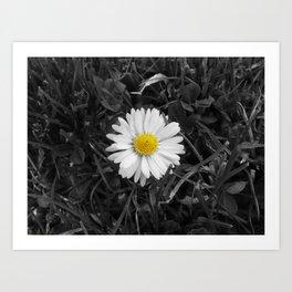 The Lone Daisy. Art Print