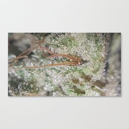 Trichome Closeup Canvas Print