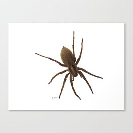 House spiders Canvas Print