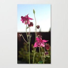 Delicately Majestic Canvas Print