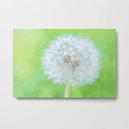 Dandelion - Just Woke Up Beauty Metal Print