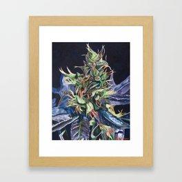 Master Kush Framed Art Print
