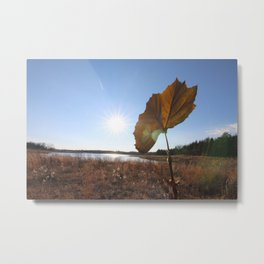 dead leaf upon a lake and the bright sun Metal Print