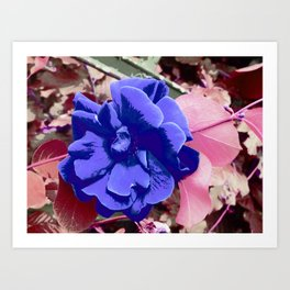 FlowerPower Fantasy 7-B Art Print
