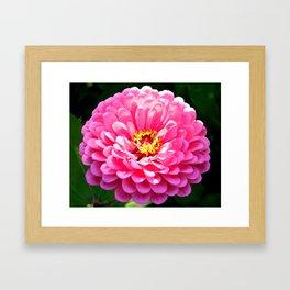 Floral Beauty #3 Framed Art Print