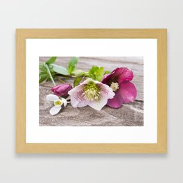 Gifts from the Garden Framed Art Print