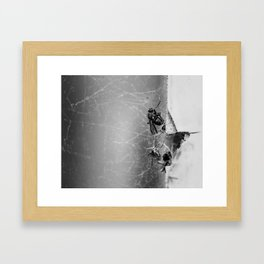 Flies Trapped In a Spider´s Web Framed Art Print