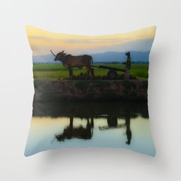 Cambodia, life on the rice field with loyalty cow in Cambodia Throw Pillow