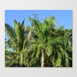 Photo 43 Palm Trees Canvas Print