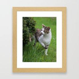 house cats Framed Art Print