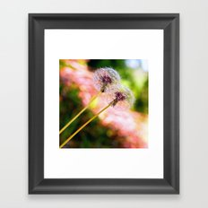 Dandelion Duo Framed Art Print