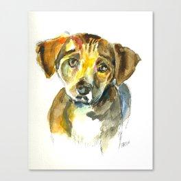 Sympathetic puppy Canvas Print
